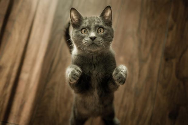 confusedcat.jpeg